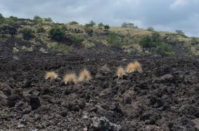 EINES UNSERER LIEBSTEN LANDSCHAFTSBILDER, BIG ISLAND, HAWAII
